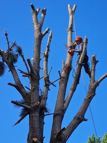 poda y tala de árboles aceptamos mercado pago