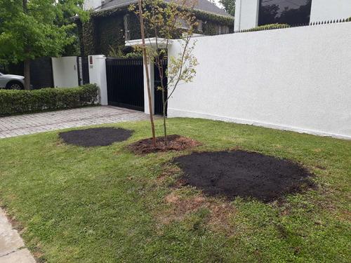 poda y tala de árboles, arbustos y palmeras