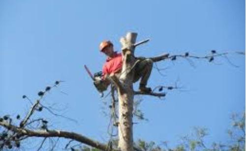 poda y tala de arboles con equipo bomberil especializado