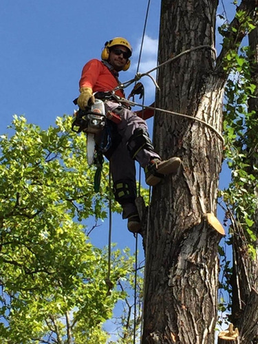poda y tala de árboles de difícil acceso