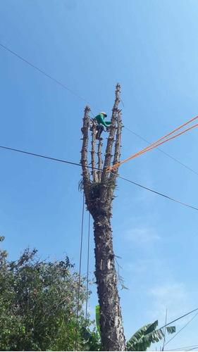 podador de árboles acreditado  certificado