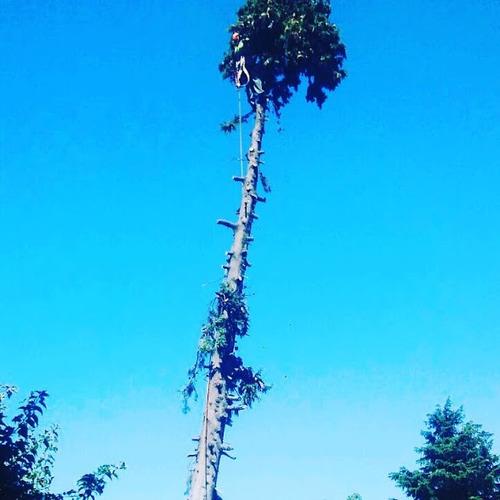 podas de arboles altura riesgo - zona norte - art
