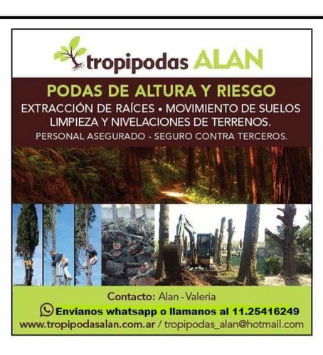 podas de árboles, palmeras, talas, desmontes, limpiezas.