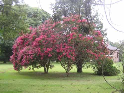 podas de arboles,   y mantenimientos de jardin