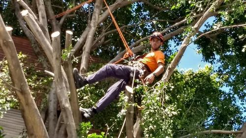 podas en altura de arboles palmeras talas extracciones