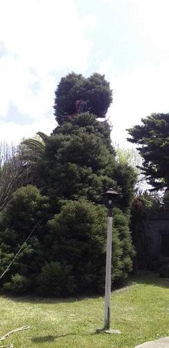 podas en altura de árboles  y extracciónes:1133327636