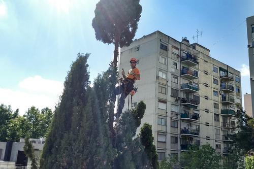 podas en altura, tala de árboles, jardinería y paisajismo