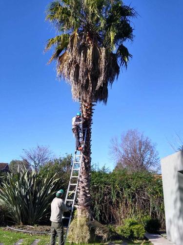 podas en altura y riesgo talas extracciones green garden