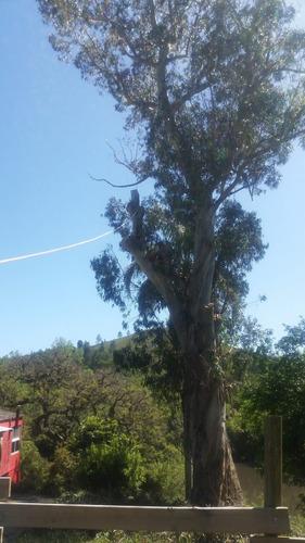 podas extracción transplantes - arbol gran tamaño y palmeras