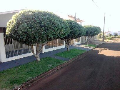 podas profissional em árvores
