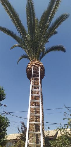 poda/tala de árboles, palmeras altura, extracción de raíces,