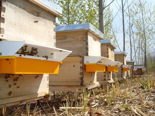 polen granulado de abeja - polen multifloral de isla - miel