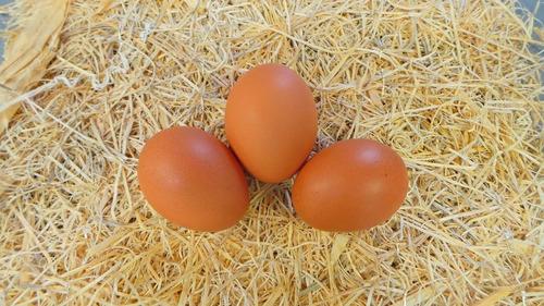 pollas de color 1-5 meses de edad, isa brown, huevos diarios