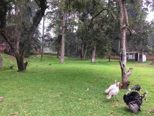 popo park excelente rancho