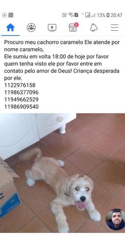 por favor peço a ajuda de todos vcs meu cachorro desapareceu