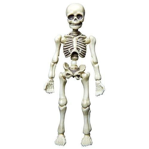 Resultado de imagen de esqueleto de un hombre
