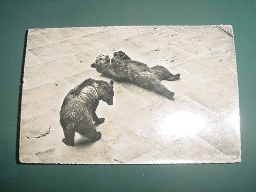 postal postcard berna zoologico fosa jaula de los osos mod2