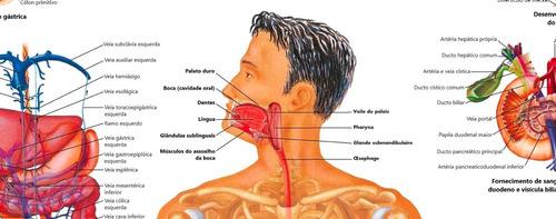 poster anatomia humana p/ clínica sistema digestivo 60x90 cm
