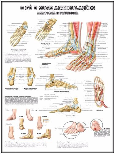 poster anatomia pé e articulações 65x100cm para decorar sala