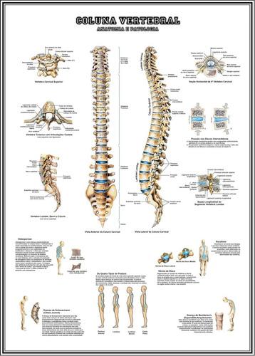 poster coluna vertebral 65x100cm decoração enfermagem sala