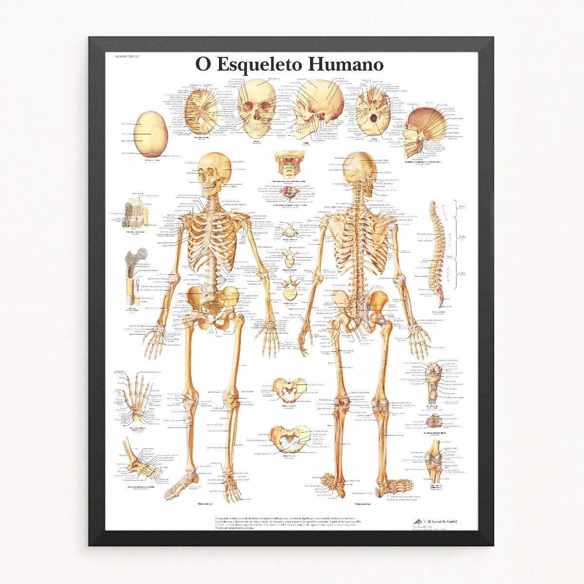 Poster Com Moldura Vidro Mapa Esqueleto Humano Medicina - R$ 149,49 ...
