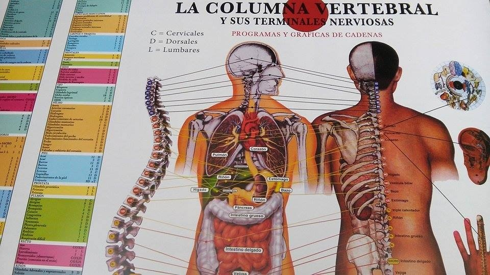 Poster De Columna Vertebral Y Sistema Muscular 85x55cm - $ 40.00 en ...