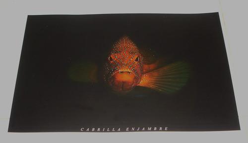 poster de imagen de un pez