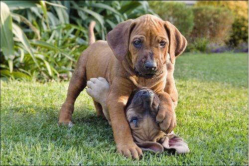 poster foto cães animais hd pet veterinária 60x90cm dog #35