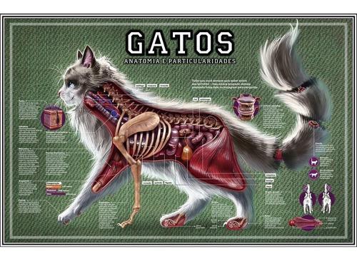 poster hd 65x100cm anatomia felinos decoração veterinária