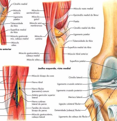 poster hd articulação do joelho 60x80cm decorar fisioterapia