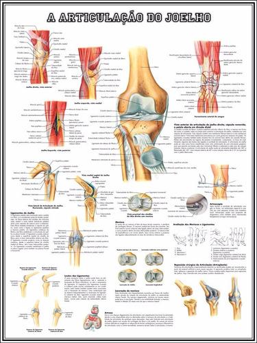 poster joelho 60x80cm decorar sala consultório fisioterapia