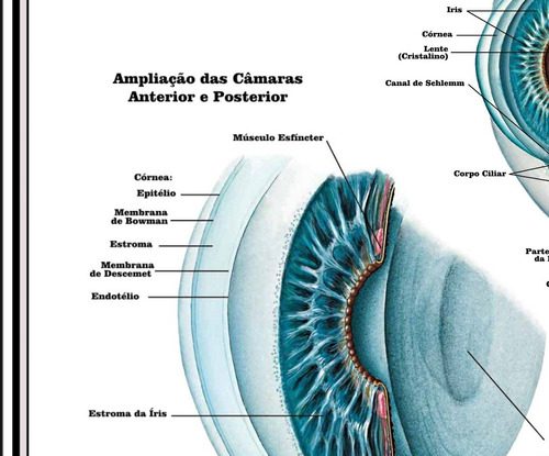 poster olho 65x100cm decorar consultório oftalmológico
