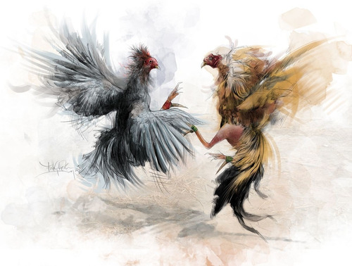 posters y parches termoadhesivos de gallos de pelea