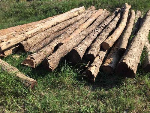 postes de madera para cerca ganadera