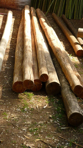 postes palos de eucalipto impregnado de 11-13cm de diámetro