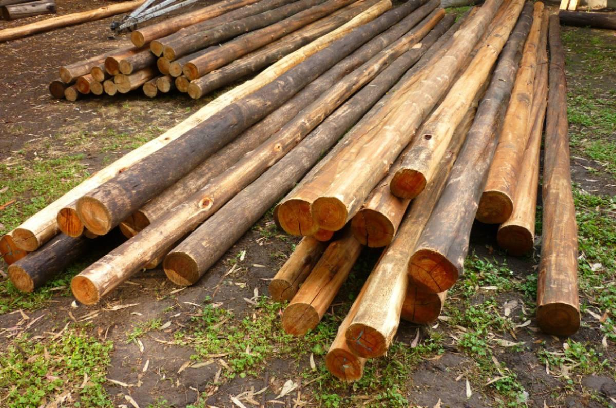 Postes palos de madera de 6 mts vigas tirantes cavios - Postes de madera ...