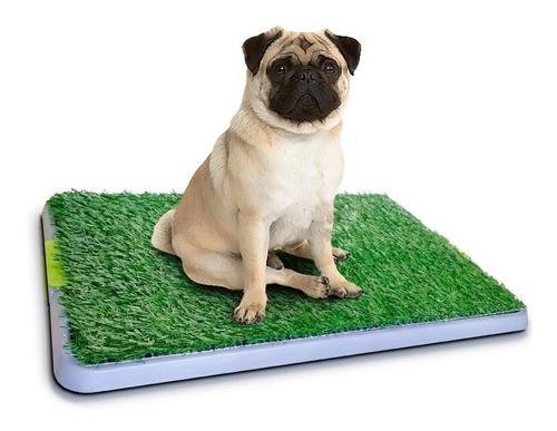 potty patch entrenamiento higiénico para tus mascotas