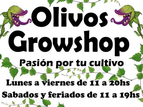 powder feeding hybrids hibrido 10gr green house- olivos grow
