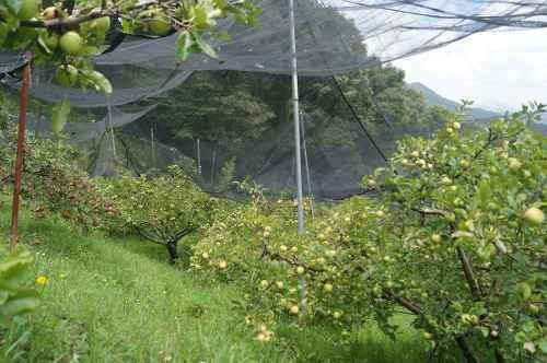preciosa huerta orgánica en la sierra gorda de querétaro para la fruticultura.