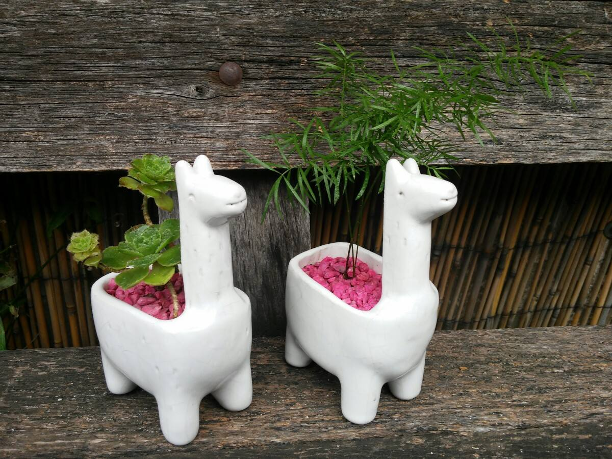 preciosas macetas de ceramica con catus o sucuus