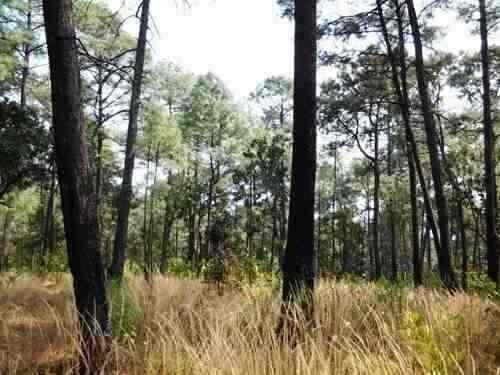 precioso bosque con vista al lago 20'  de valle de bravo