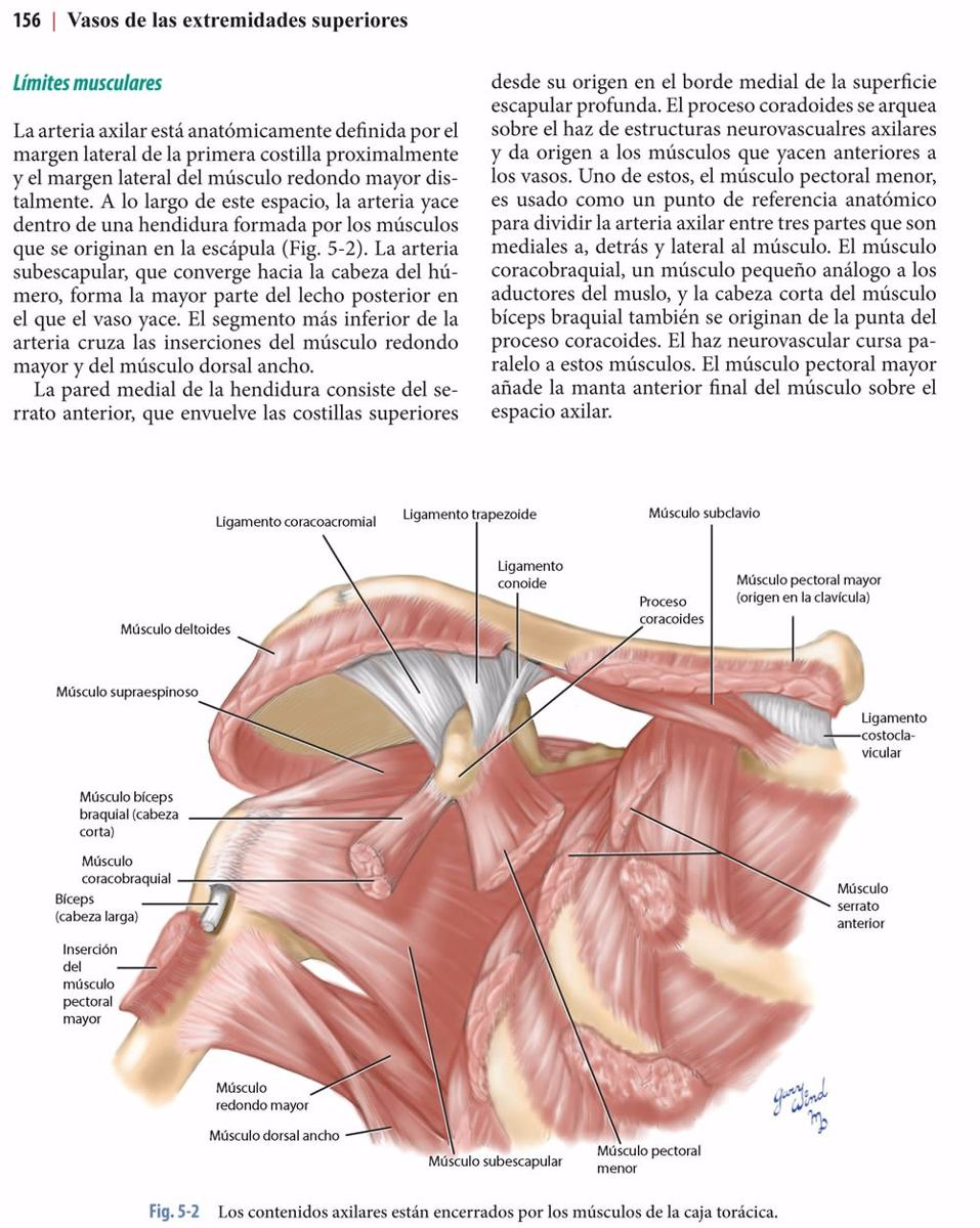 Presentaciones Anatómicas En Cirugía Vascular / Amolca - $ 105.000 ...