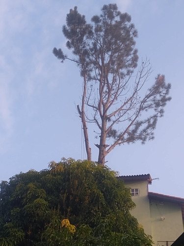 prestação de serviço de corte e poda de árvore.