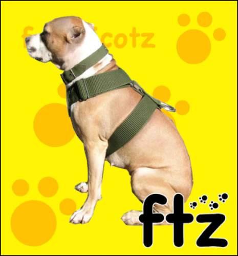 Tipos de collares para perros pitbull for Collares para perros