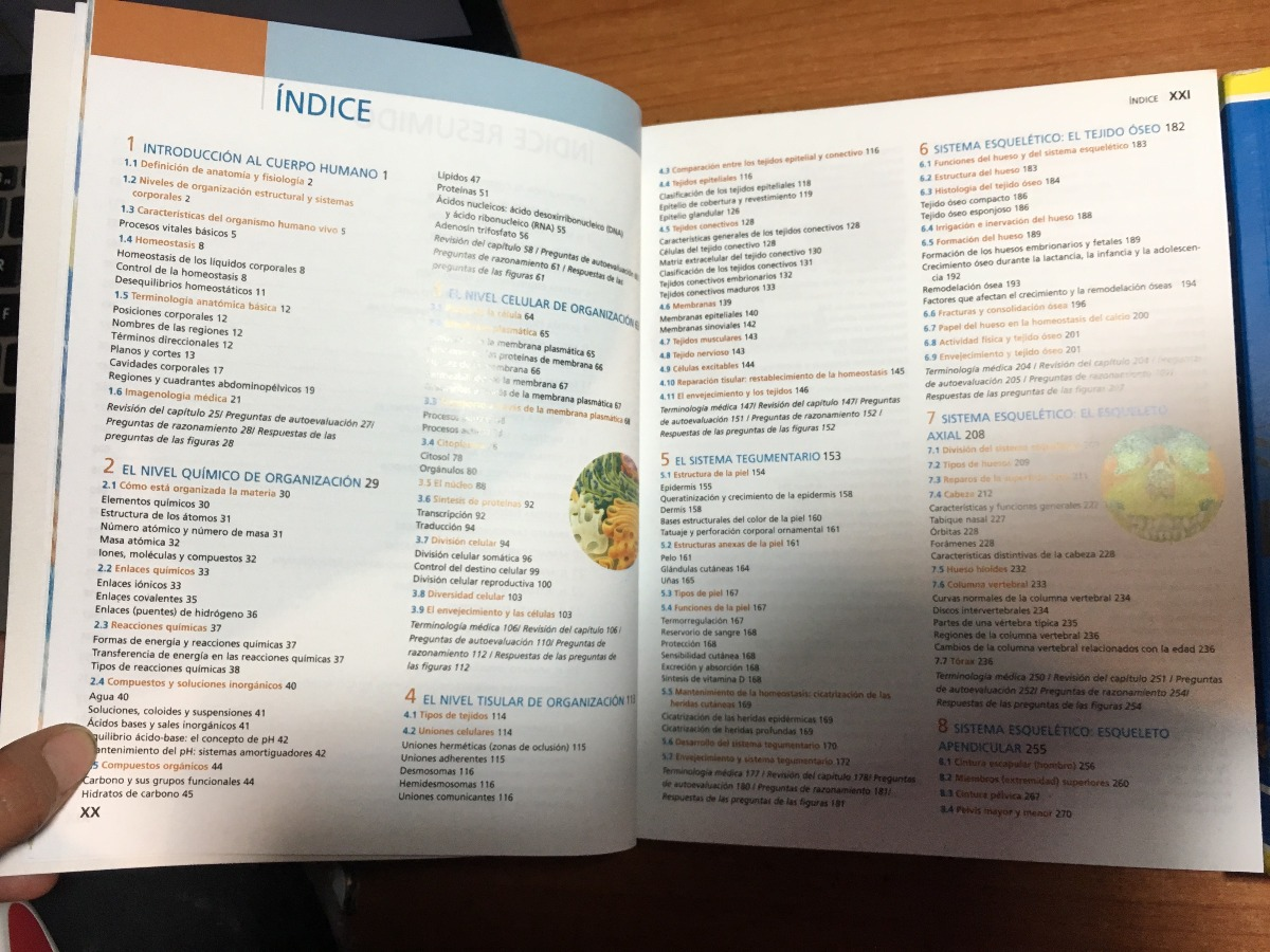Dorable Anatomía Y Fisiología 1 Hoja De Trabajo Para Los Tipos De ...