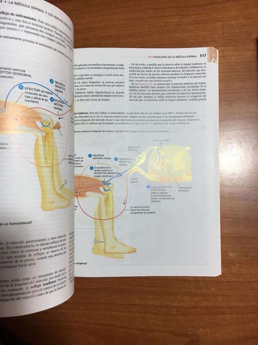 Encantador Opinión De Hoja 13 De La Neurona Anatomía Y Fisiología ...