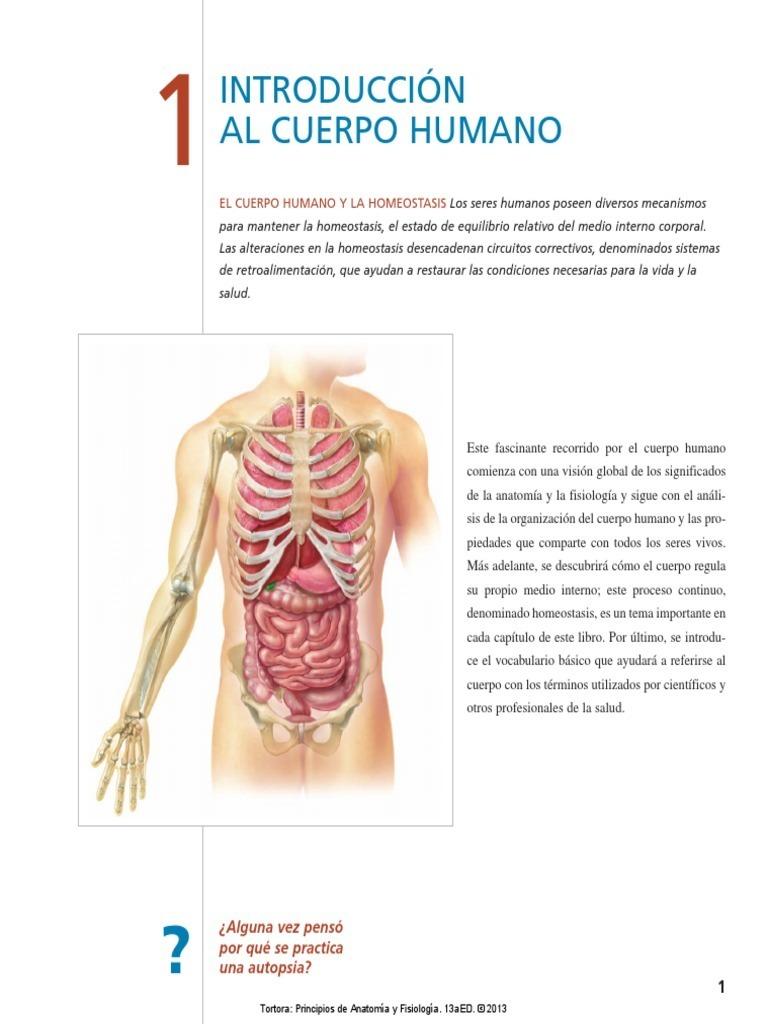 Perfecto Anatomía Humana Y Fisiología Y Marieb Hoehn Octava Edición ...