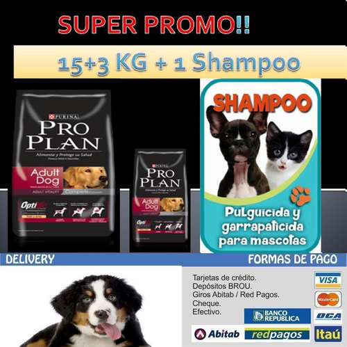 pro plan adulto 15+3 kg + snacks + shampoo + envio $1980