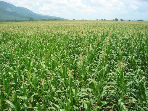 producción de bioinsumo para suelos carbonato de calcio