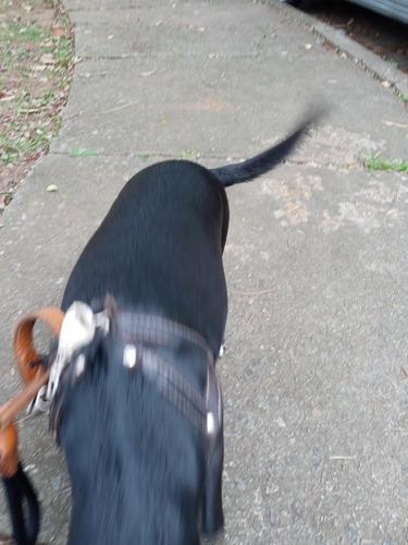 profissional passeador de cães